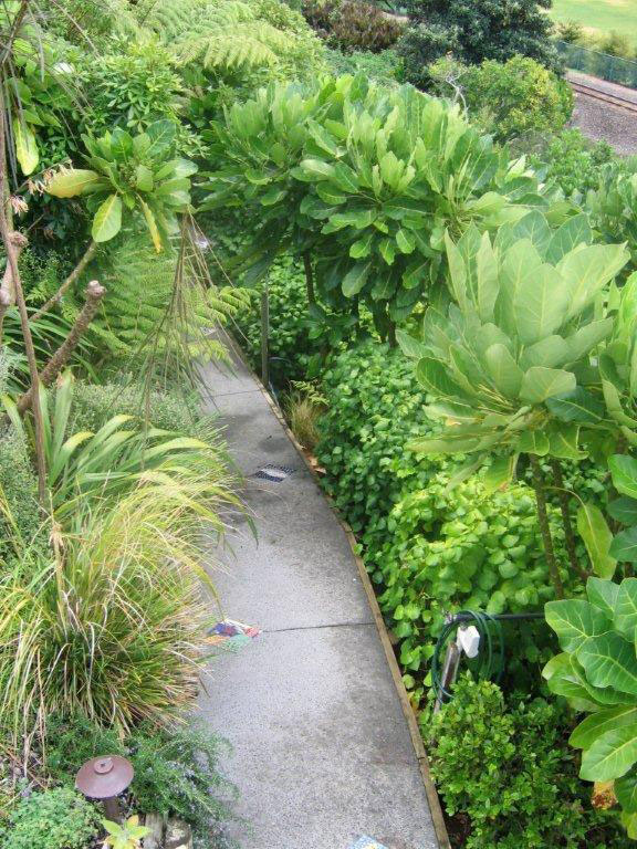 Earth canvas landscaping tauranga rural residential for Native garden designs nz